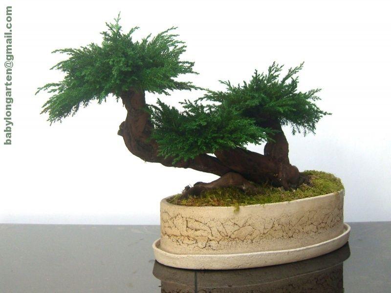 Sztuczne Drzewko Bonsai Sztuczna Roslina Wys 38 6159573105 Oficjalne Archiwum Allegro Planters Planter Pots Pot