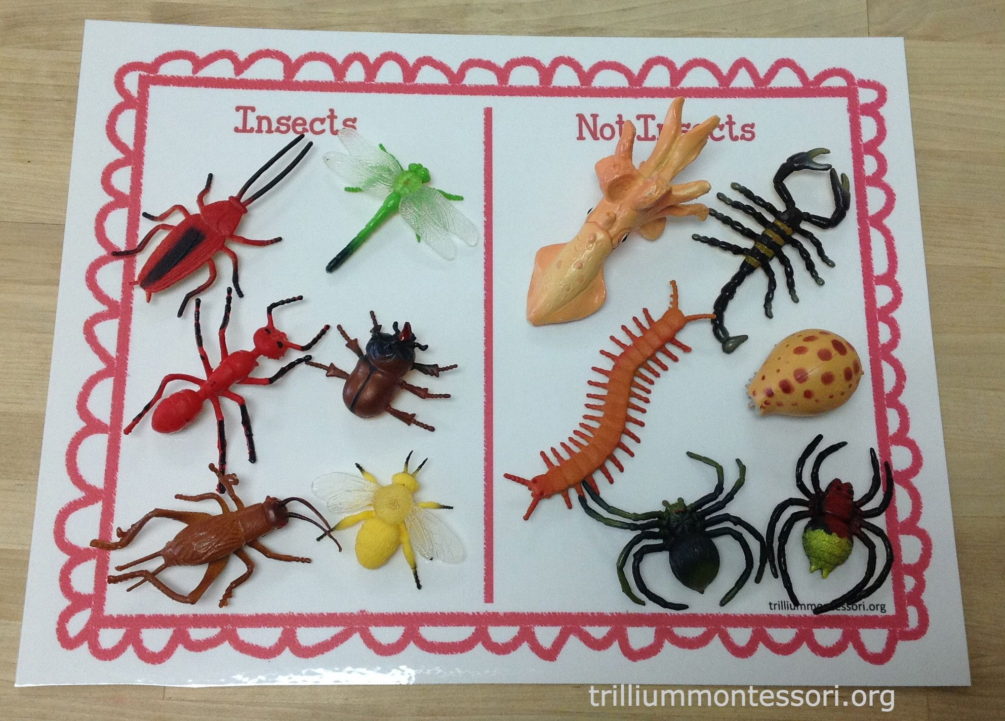 learning about bugs insects preschool bugs insect activities. Black Bedroom Furniture Sets. Home Design Ideas