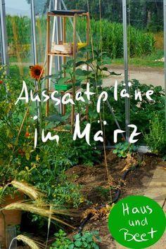 Aussaatplane Im Marz Jetzt Ist Alles Moglich Haus Und Beet In 2020 Garten Anpflanzen Gemuse Anbauen Garten Hochbeet