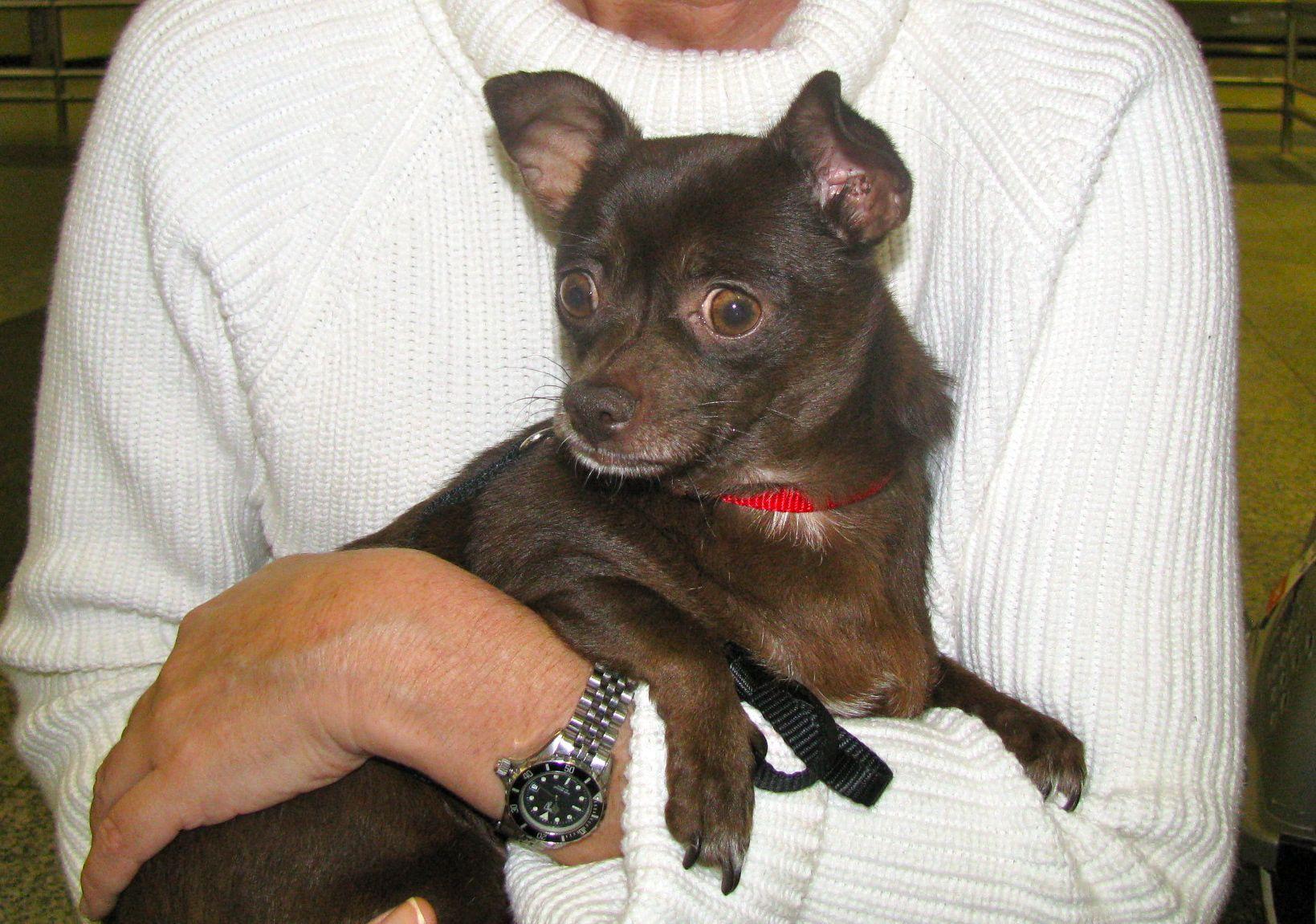 Coco Comes Home » Paws PR Blog