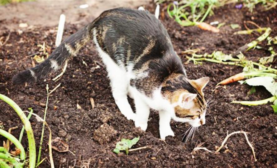 Comment cr er un r pulsif naturel et non dangereux pour les chats jardinage repulsif chat - Repulsif chat jardin naturel ...