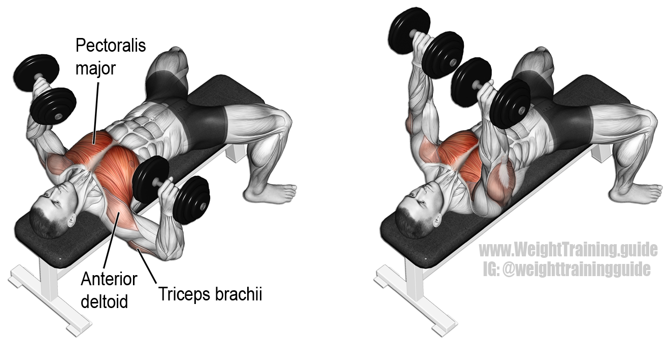 Dumbbell Bench Press Exercise Guide And Video Weight Training Guide Chest Workouts Dumbbell Workout Best Chest Workout