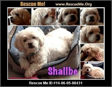 Maltese Rescue New Jersey Dog Adoption Bichon Frise Dogs Bichon Frise Rescue