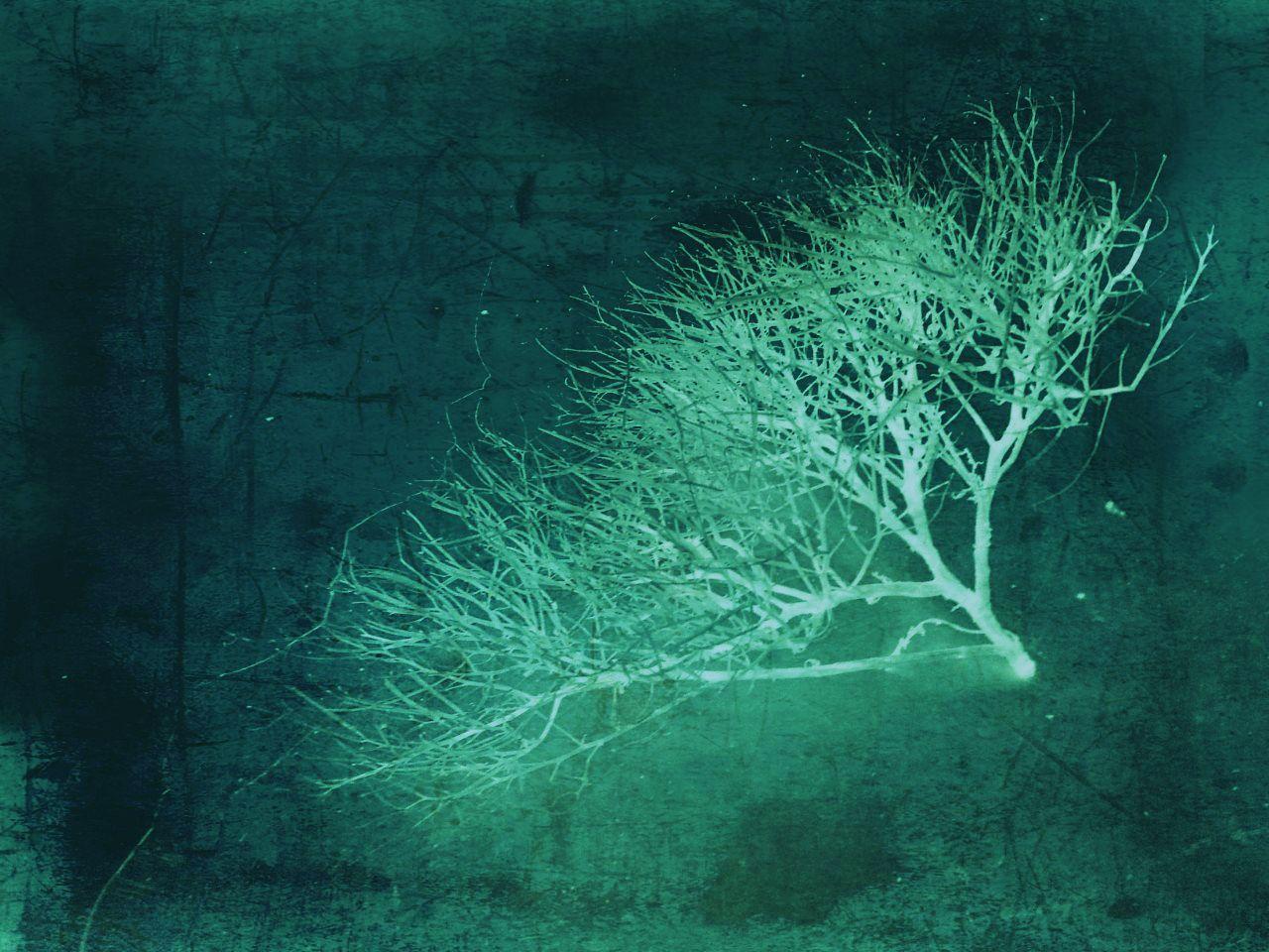Robin Brown Photography #mood #texture #emerald