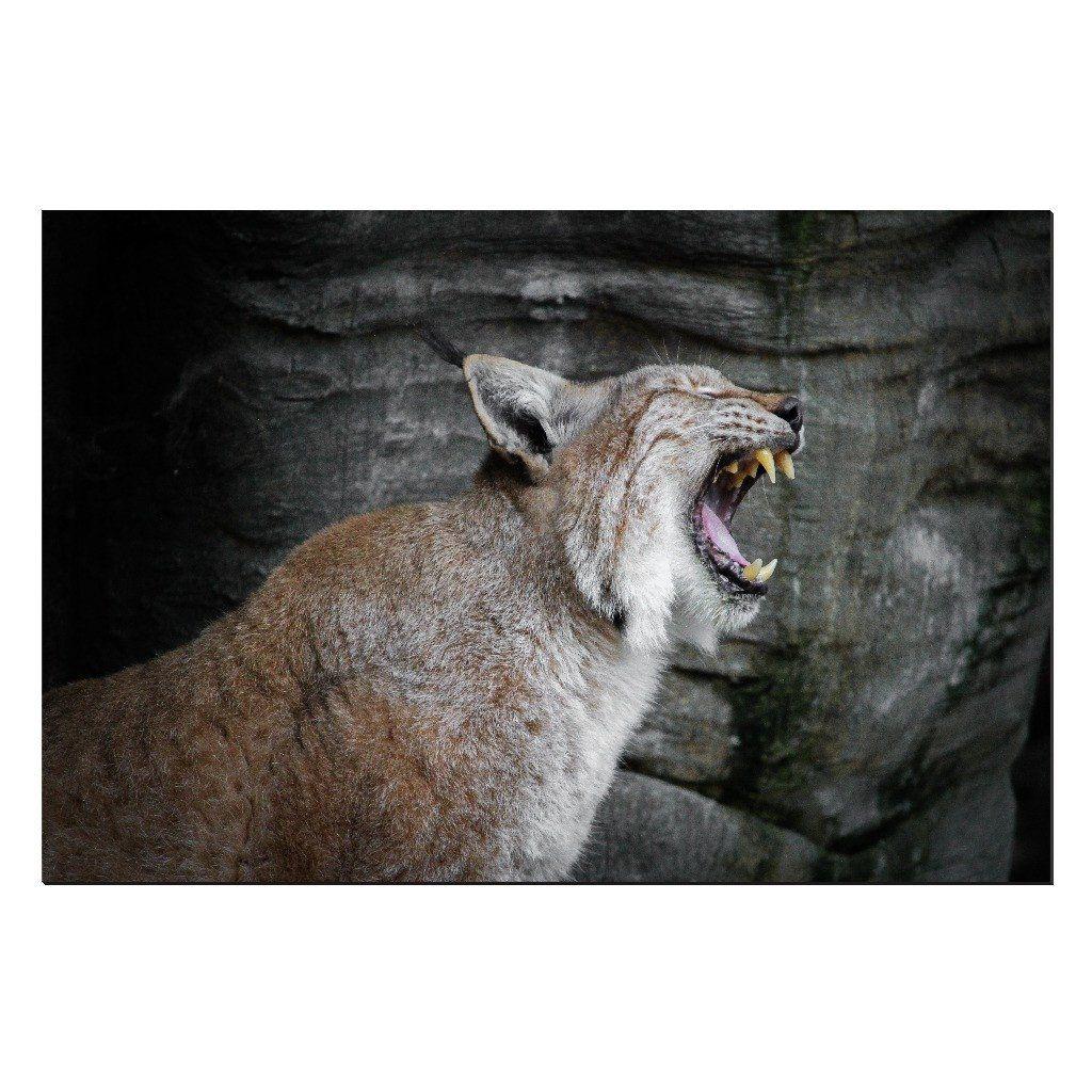 Wild #3 (Lynx Canvas Print)