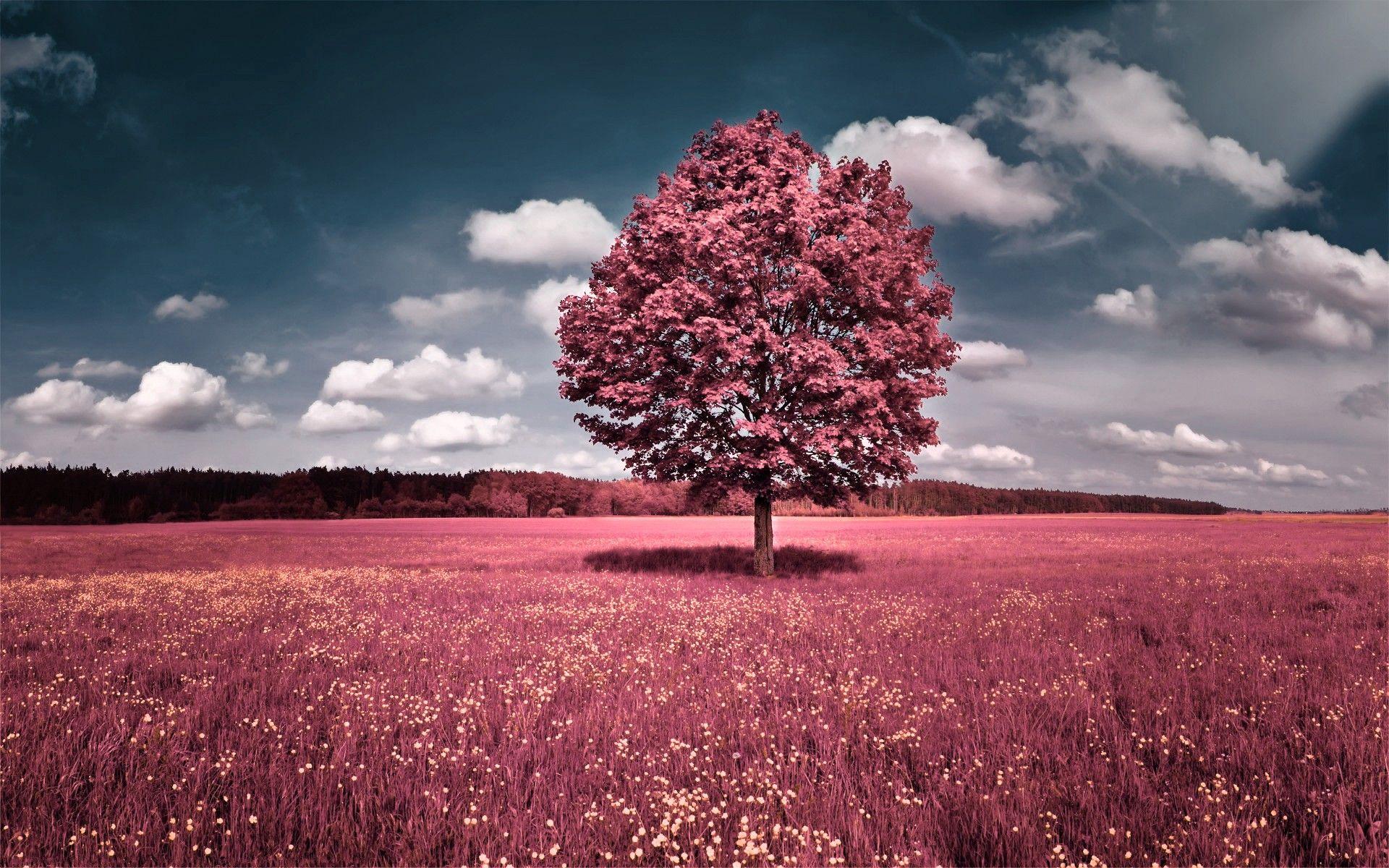 Beautiful Pink Flower Field Autumn Tree Pink Nature Pink Grass Pink Trees
