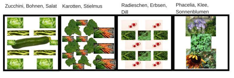Lege dein Gemüsebeet morgen an, trotz wenig Erfahrung #gemüsegartenanlegen