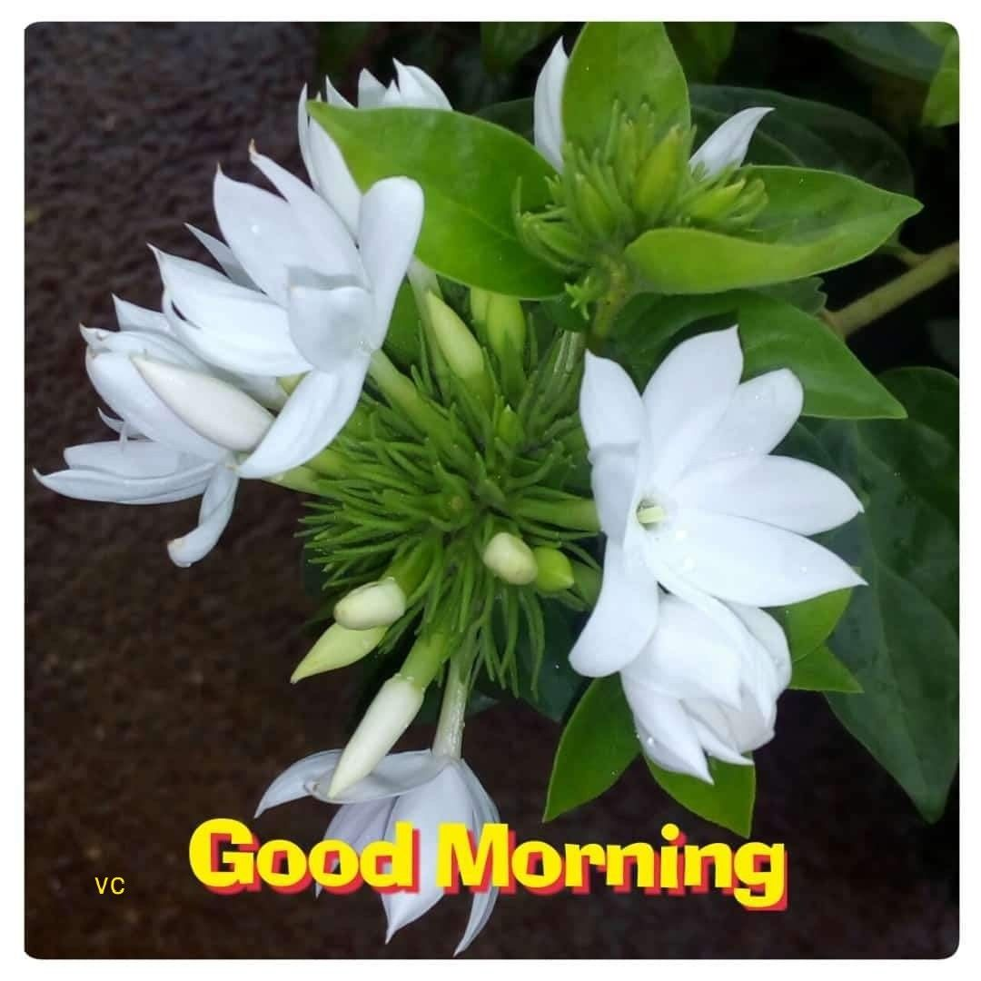 Pin By Vamanj On Good Morning Image In 2020 Good Morning Messages Good Morning Quotes Good Morning Images