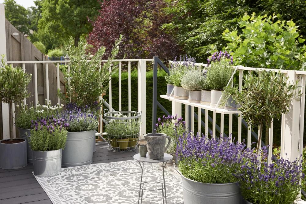 10 Pomyslow Na Kwiatowe Kompozycje Na Balkon Lawenda I Rosliny Egzotyczne Fot Flower Council Holland Provence Garden Garden Design Garden