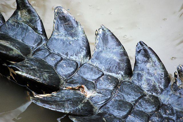 Crocodile scales | Flickr - Fotosharing!