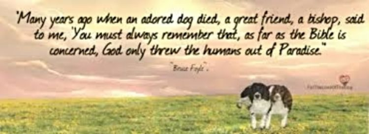 Do Animals Go To Heaven ? Dog died, Dogs, All dogs