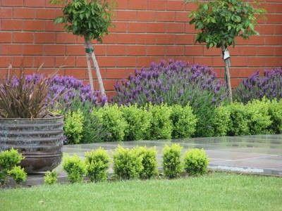Lavender garden ideas gardening made easy providing for Easy care garden ideas