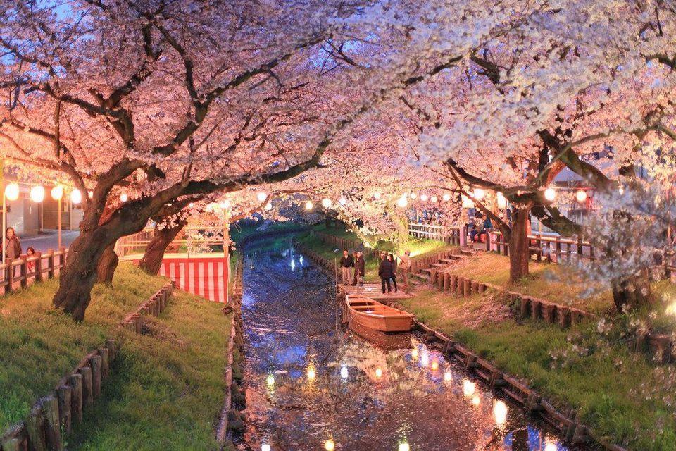 Japan Road Trip Cherry Blossom Viewing In Nagoya The Mint Story Hanami Aesthetic Japan Japan