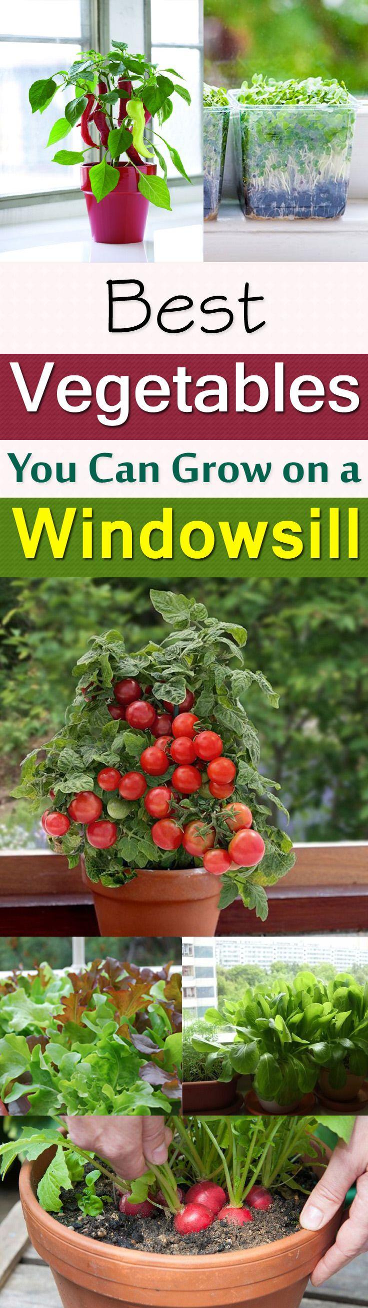 11 Best Vegetables To Grow On Windowsill Indoor 400 x 300