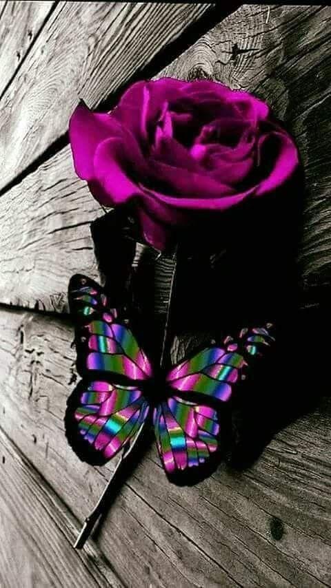 Pin By 香月 On Borboletas Purple Roses Butterfly Wallpaper Color Splash