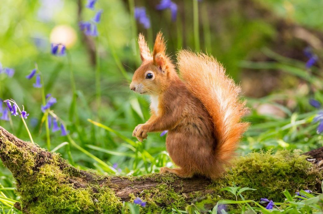 Wie kann man Eichhörnchen in den Garten locken? | Écureuil