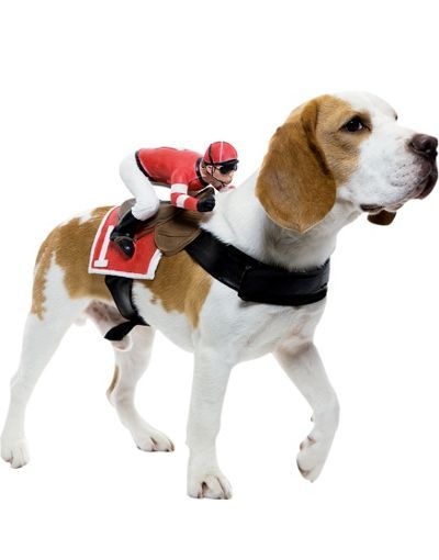 Ride On Jockey Dog Costume Maybe Dog Halloween