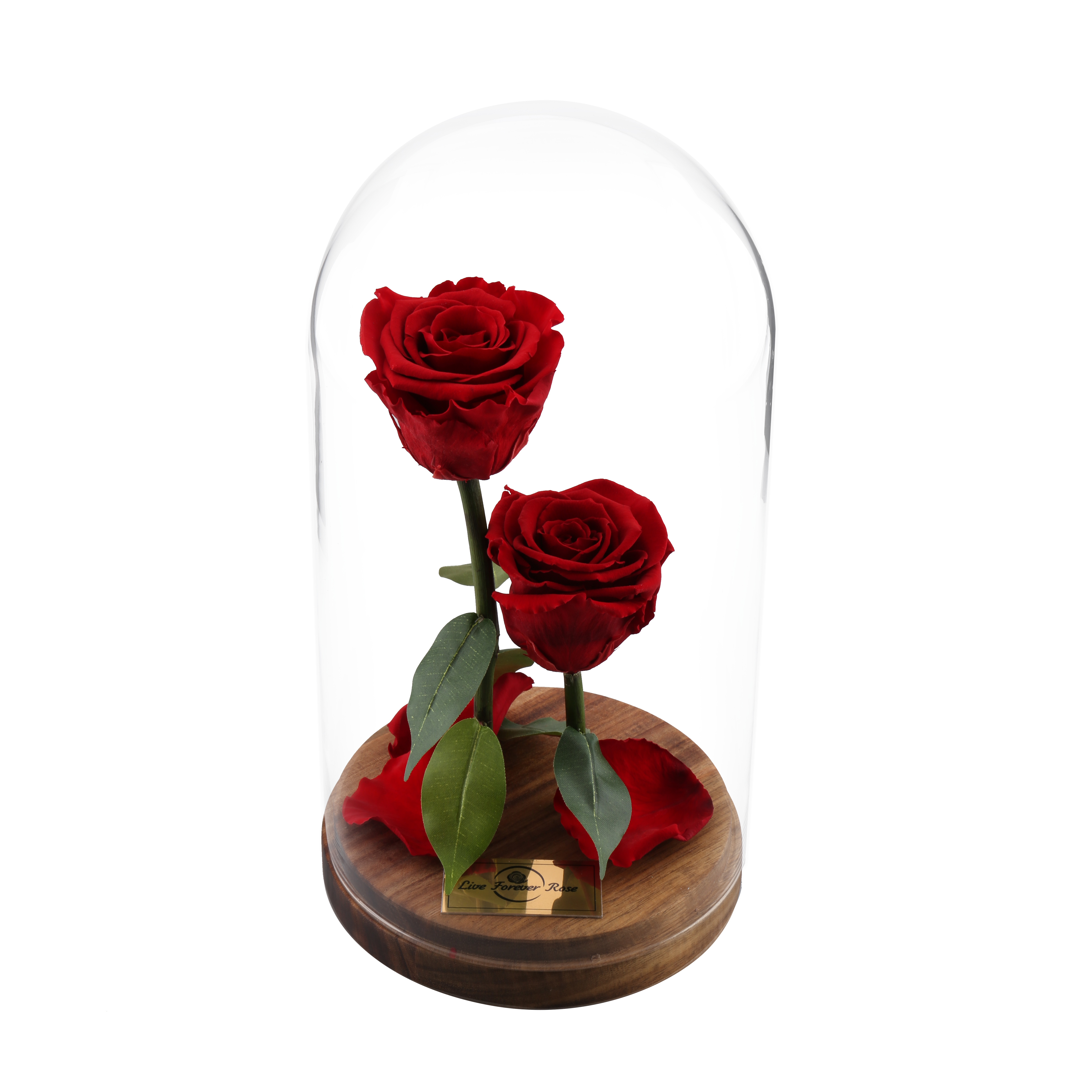 Beauty And The Beast Rose In Dome Glass Liveforeverrose