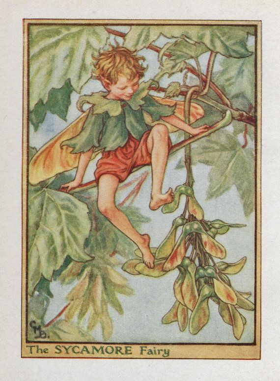 Flower Fairies: THE SYCAMORE FAIRY Vintage Print c1930 by Cicely Mary Barker