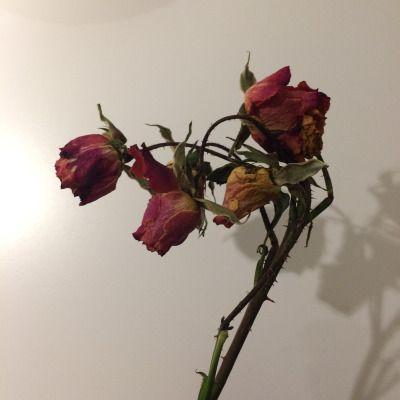 Pin Oleh Graciela Cantele Di Flower Bunga Fotografi Mawar