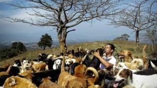 Hoy Extremadura A Diario Con Noticias Y última Hora Del Periódico Y La Edición Digital Edicion Digital Perro Callejero Animales