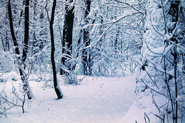 winter walk through the woods by january fairy, via Flickr