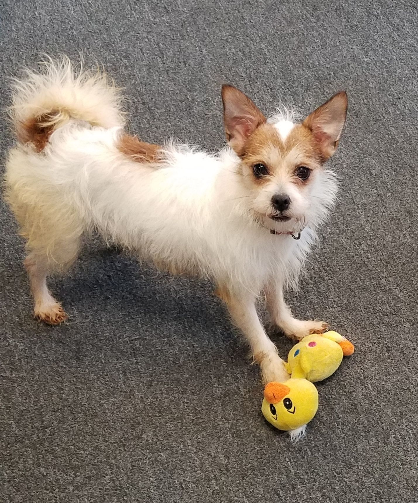 Adopt Missy On Petfinder Low Energy Dogs Animals Beautiful Animals