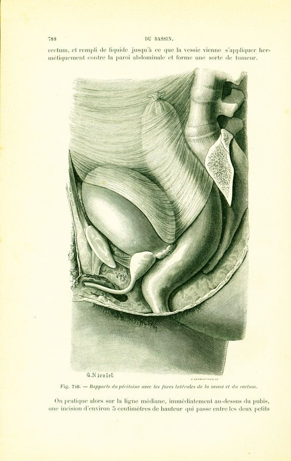 1897 Human anatomy, Internal organs Rectum Bladder Peritoneum ...