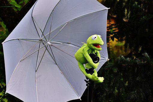 Kermit, Photo Screen, Frog, Funny