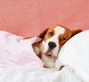 7 Home Remedies For Dog Seizures Dog Seizures Dogs Seizures