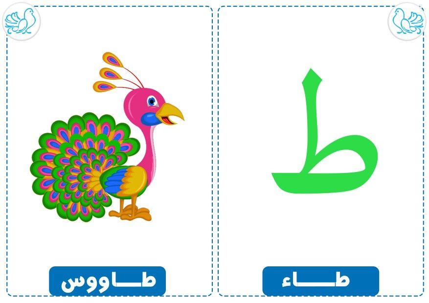 Pin By Elyamama On حرف وحيوان Learning Arabic Arabic Kids Arabic Alphabet For Kids