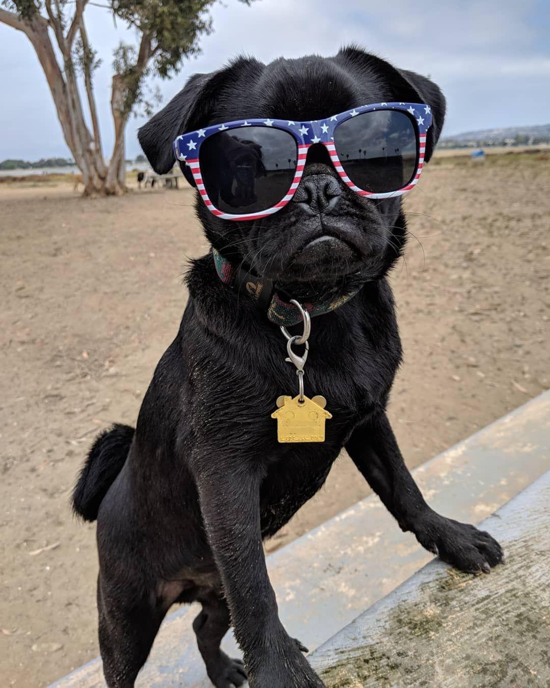 Daryl Pugxon Is Enjoying Sundaymorning Bark With Us Www