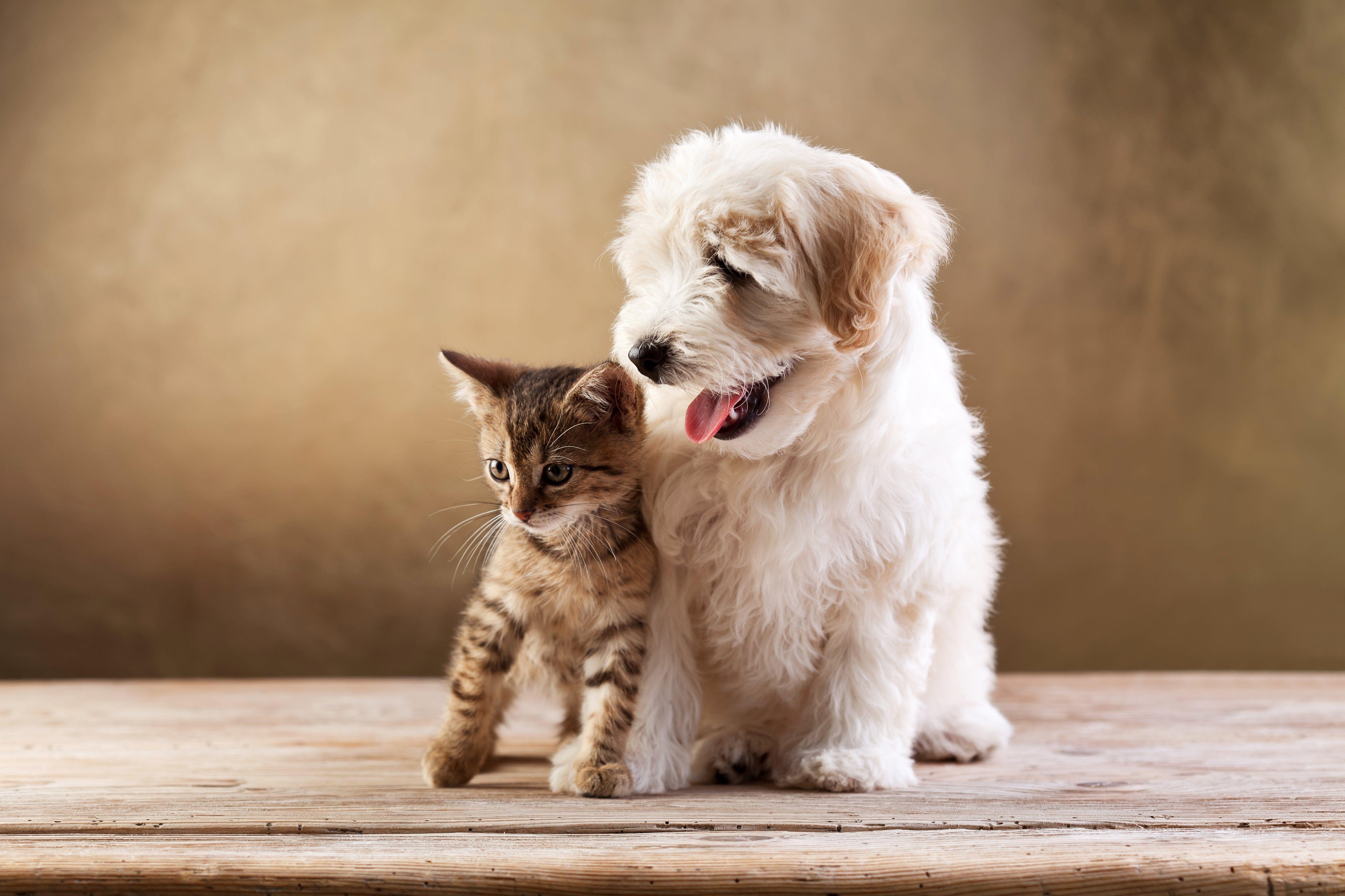 Kitten And Puppy Wallpaper Kitten Wallpaper Kittens And Puppies Pets