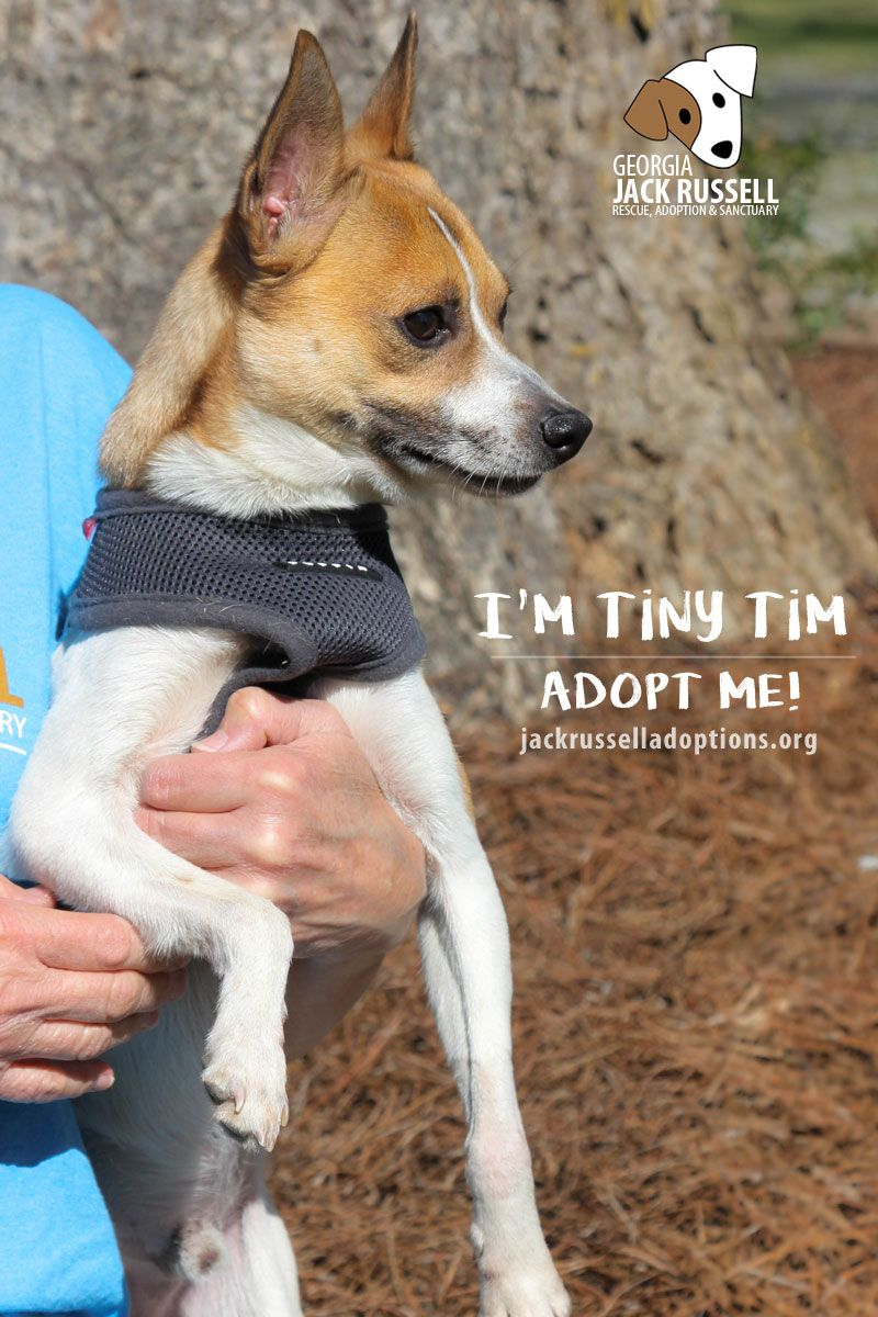 Pin On Adoptable Dogs May 2017