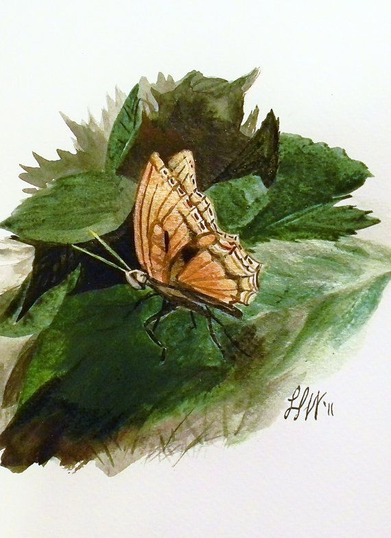 Original Painting  Butterfly  5x7 Ink and by NaturalistBent, $35.00 #maineteam