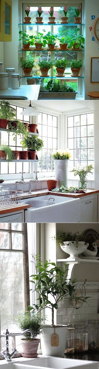 Do you grow herbs in your kitchen