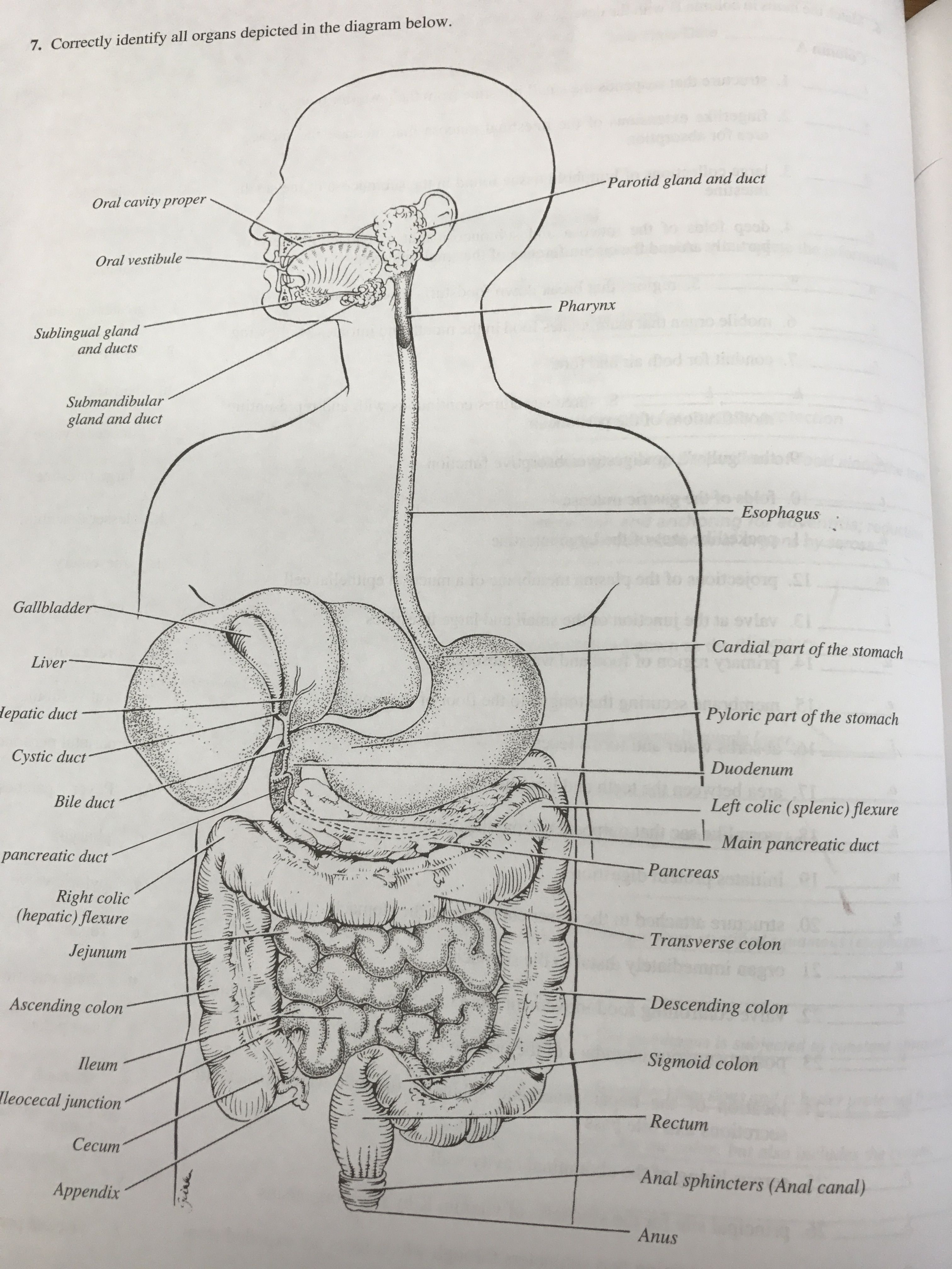Anatomy And Physiology Of Ent Organs Wiring Diagram