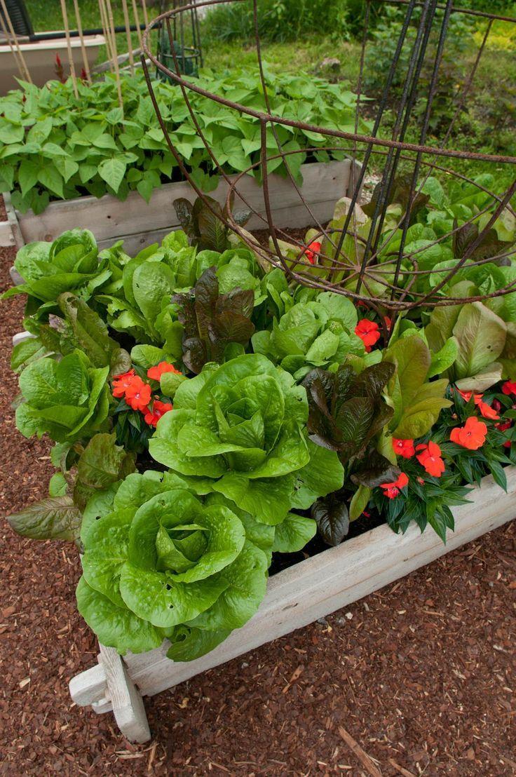 Home vegetable garden design  Edible Landscaping Kitchen Garden  jardin potager  bauerngarten