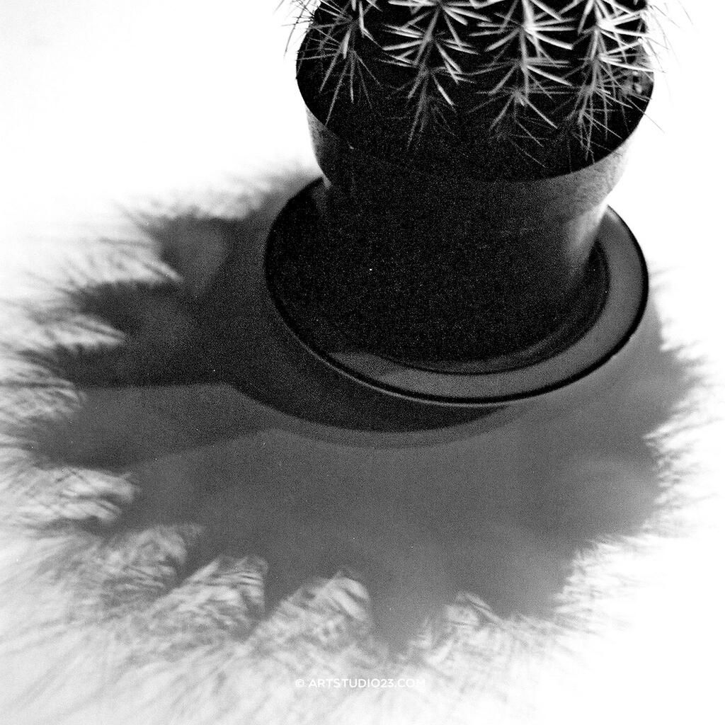 Organising my new HD ... I just love old photos from my very first! Photo: study of a #cactus #shadow #stjoost #breda pic.twitter.com/JtcUmiE7NR