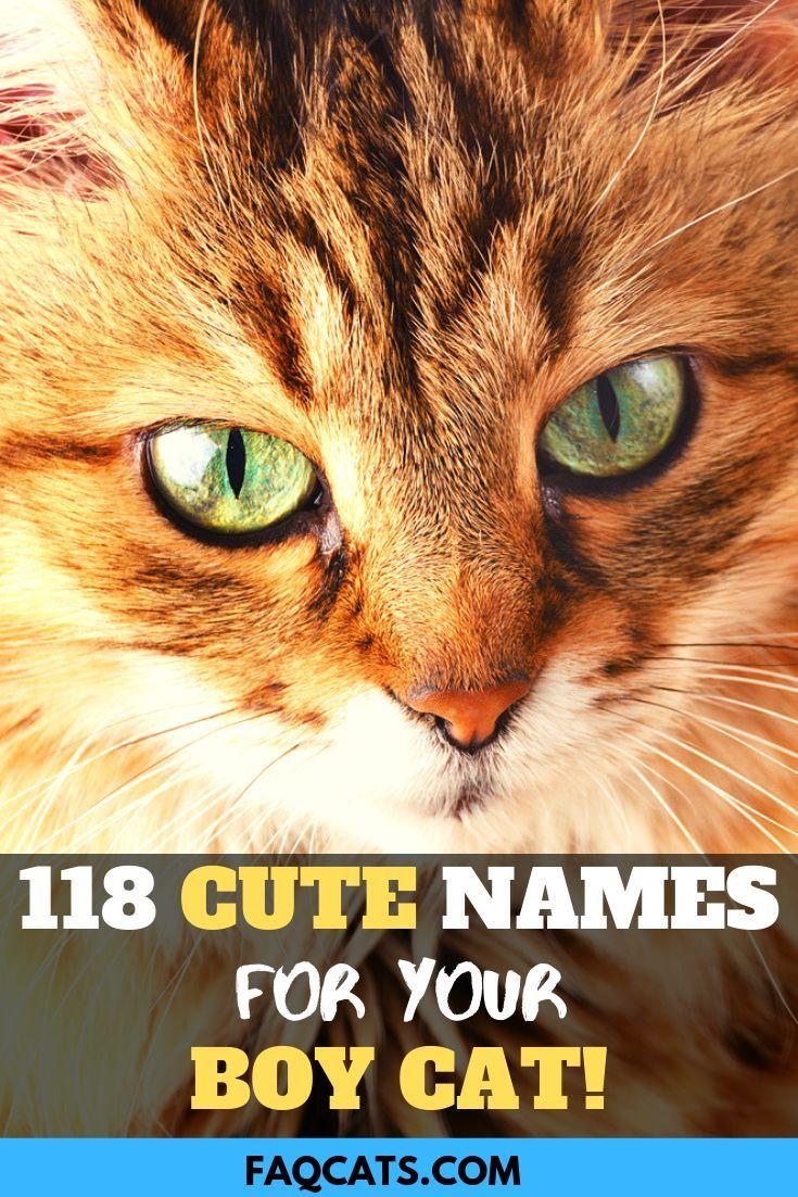 118 Male Tabby Cat Names Tabby cat, Tabby cat names