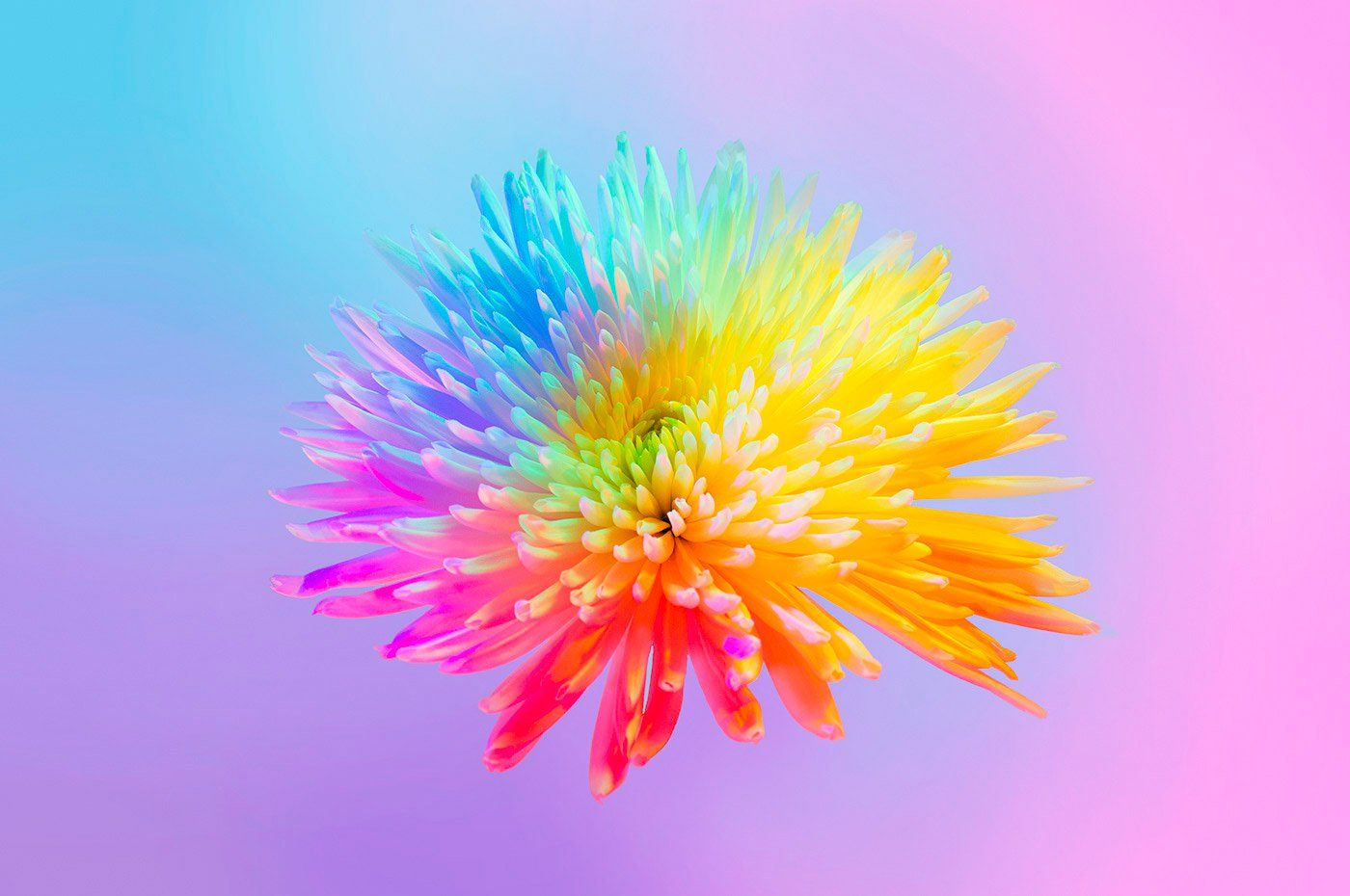 Neon Flowers Photography Art Direction By Claire Boscher
