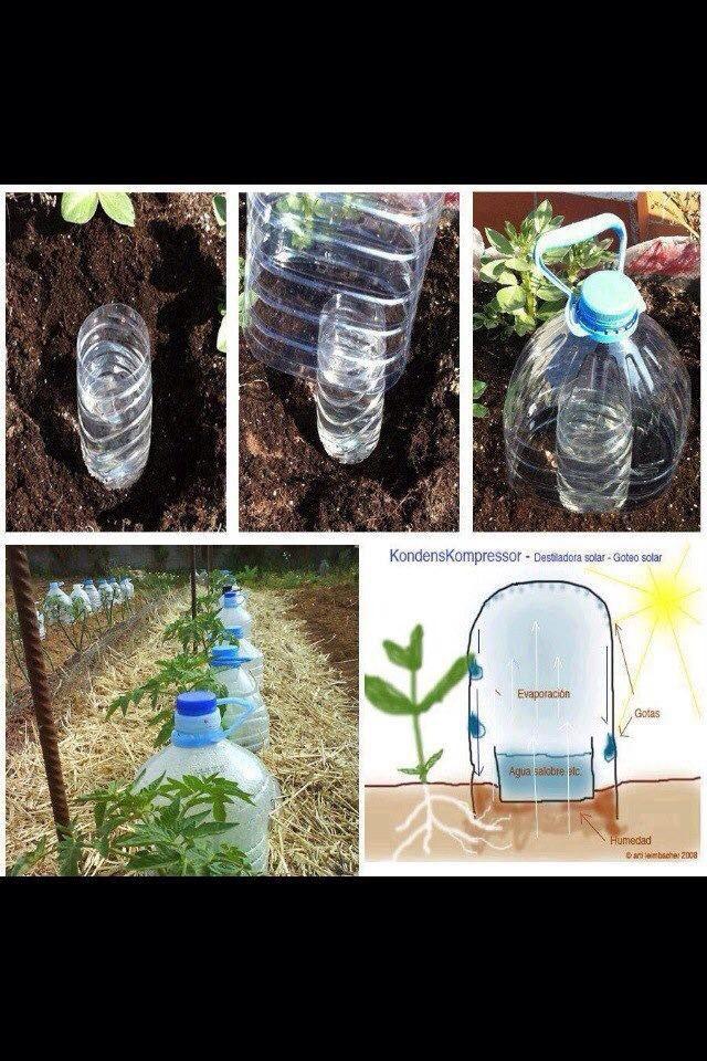 Facon De Garder La Terre Humide Arrosage Jardin Jardinage
