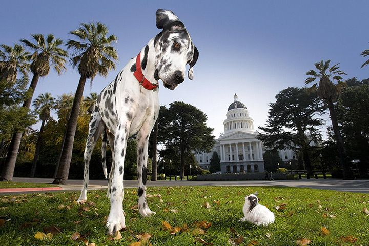 Best Of Eyewitness Wildlife World S Tallest Dog Tallest Dog Dogs