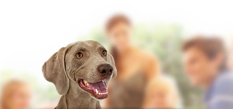 Verband für das Deutsche Hundewesen (VDH) Alles über