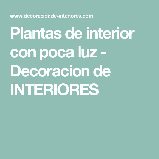 Plantas de interior con poca luz decoracion de for Plantas de interior para poca luz