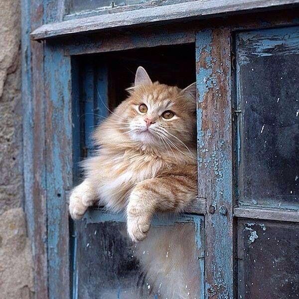 Картинка прикол про кошку на крыльце, поздравлением николая как