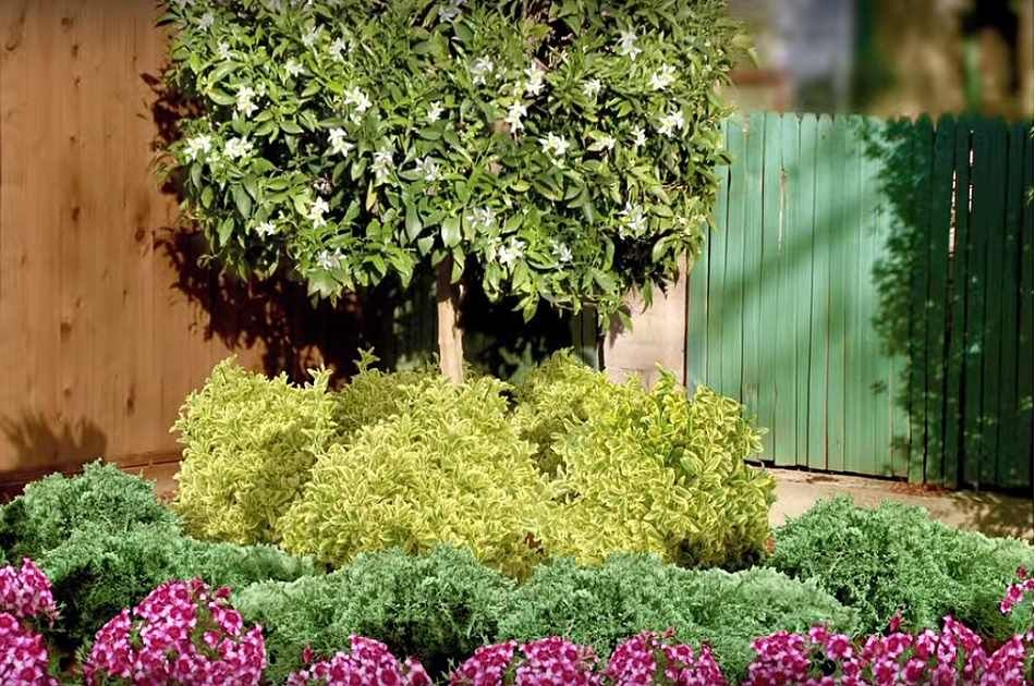Wish to alter, improve, or design your garden? With these simple