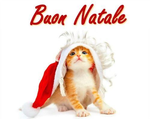Immagini Natalizie Di Animali.Immagini Di Natale Per Whatsapp Whatsapp Web Whatsappare