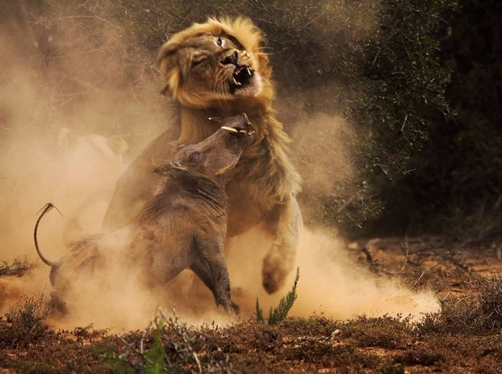 عکسهایی که زیبایی (و در مواردی خشونت) در حیات وحش را به خوبی نمایش میدهند