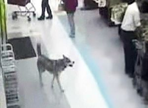 Video dog i caught on a hidden camera wife-3971